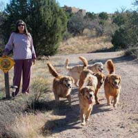 xanadu golden retrievers property 7