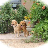 xanadu golden retrievers property 10