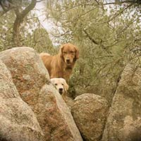 xanadu golden retrievers property 11