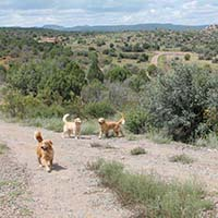 xanadu golden retrievers property 13