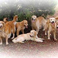 xanadu golden retrievers property 15