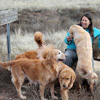xanadu golden retrievers property 17