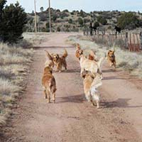 xanadu golden retrievers property 18