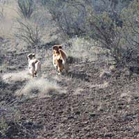 xanadu golden retrievers property 23