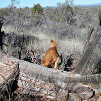 xanadu golden retrievers property 28