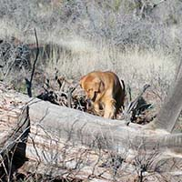 xanadu golden retrievers property 29